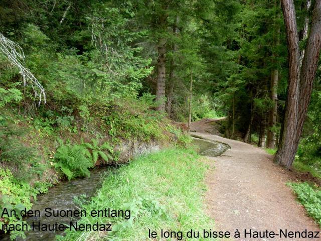 chemin pédestre au long du Bisse du milieu
