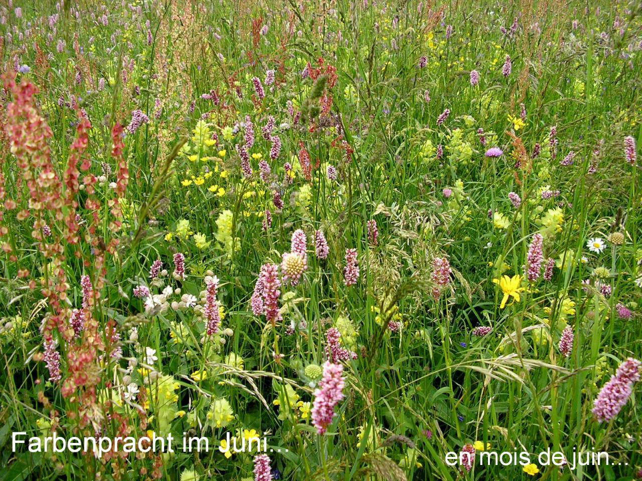 La floraison en Juin