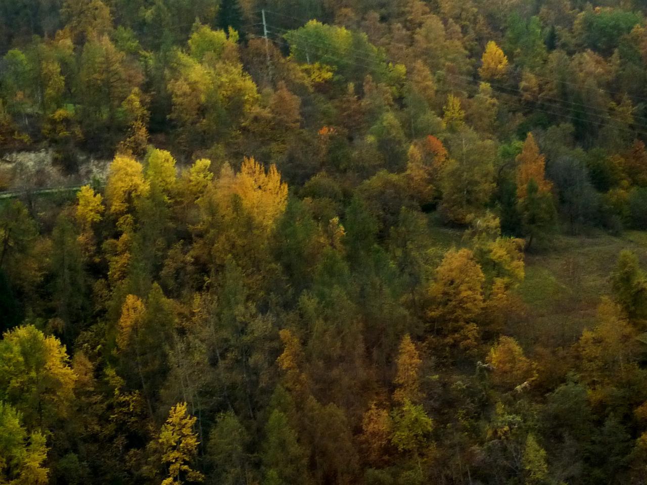 Herbst-Galerie