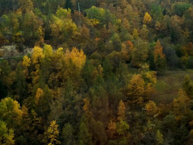 Galerie d'automne