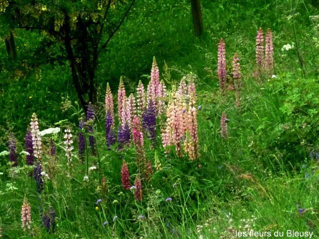 Blumen in Bleusy