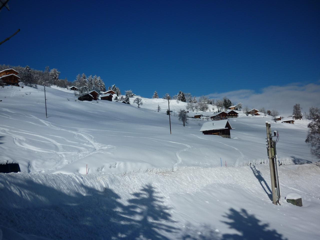 Bleusy hivernal