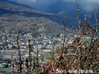 Ville de Sion fleurie...