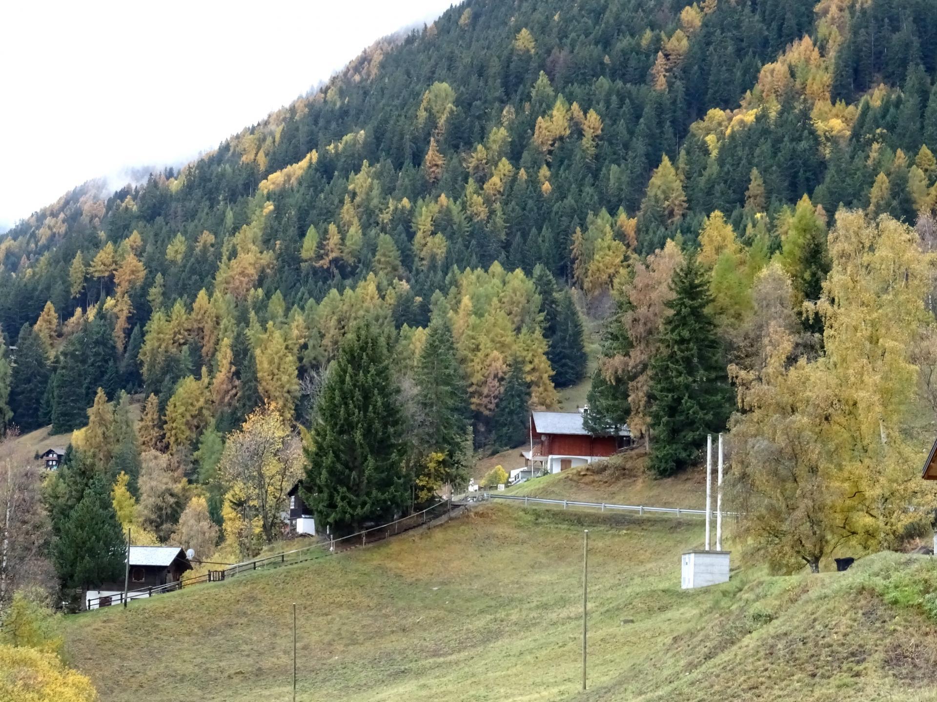 Bleusy en automne